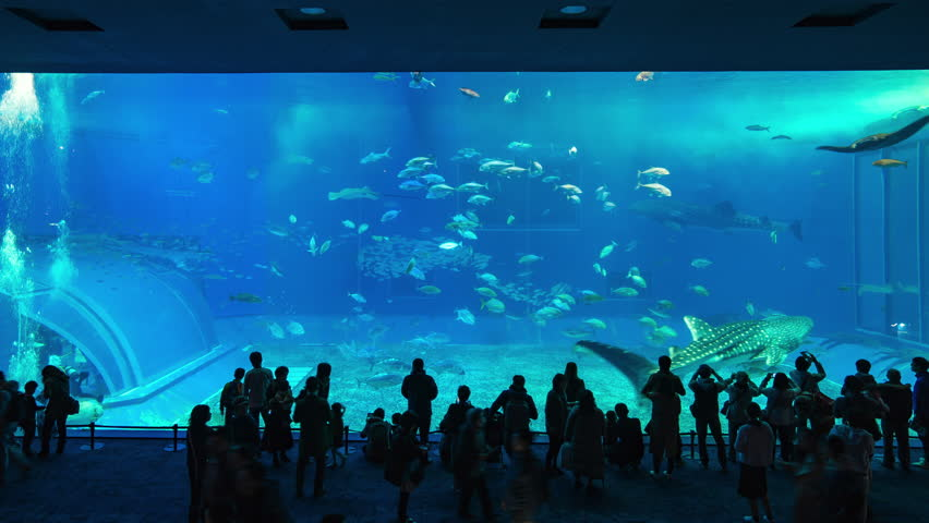Okinawa, Japan - January 12, 2018: Timelapse video of Okinawa Churaumi Aquarium in Ocean Expo Park in Okinawa, Japan Time Lapse 4K | Shutterstock HD Video #1006861696