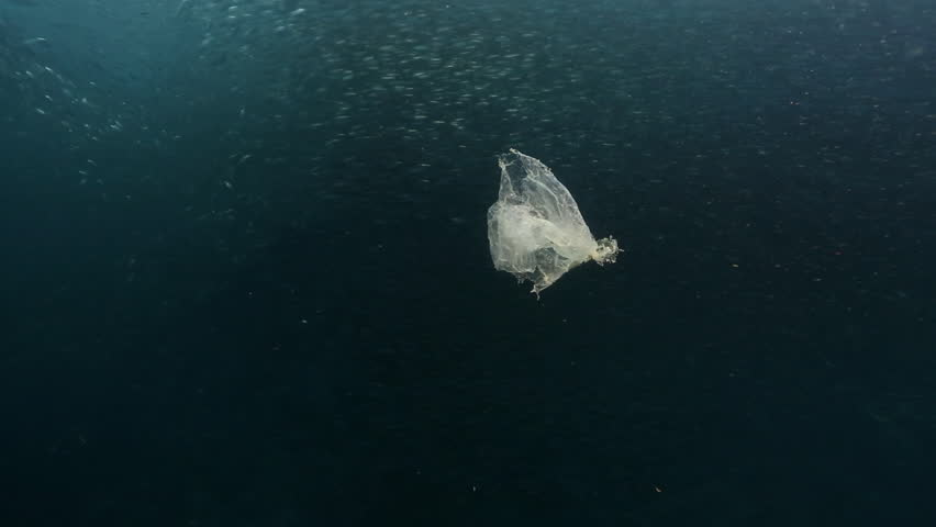 Piece of plastic floating in ocean with shoal of sardines swimming behind #1006894795