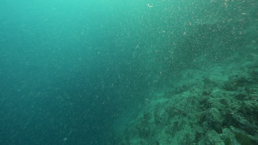 Coral reef bad visibility underwater from plankton, sand and silt during rainy season #1006903906