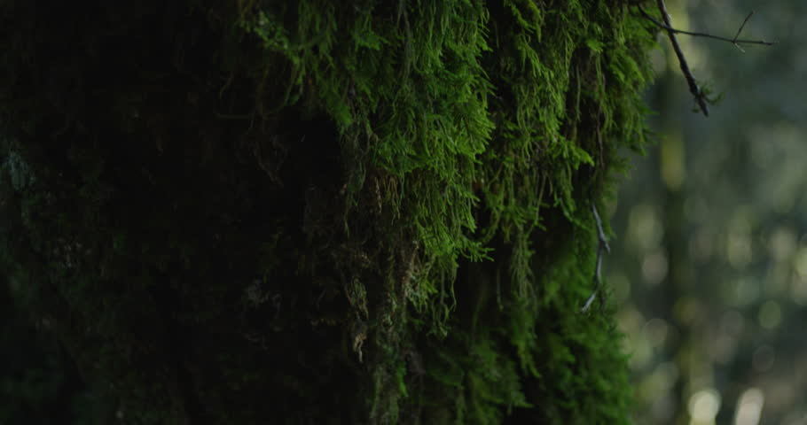 Mossy Trees in Forrest shot on Red