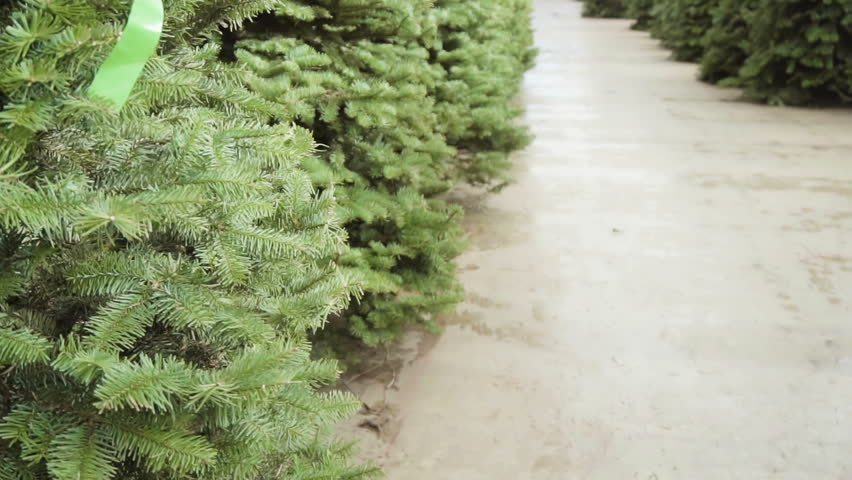 Slow motion. Christmas tree farm with large variety of evergreen trees. | Shutterstock HD Video #1007027152