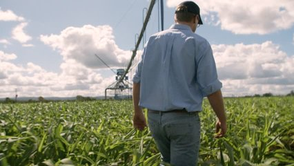 A Farmer Walks Heroically Through His Crop Field, In Slow Motion