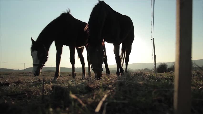 Horses at sunset | Shutterstock HD Video #1007070532