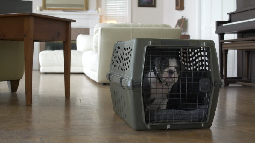 Girl letting a dog out of a travel kennel