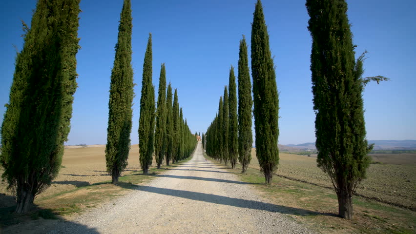 Slow motion stabilized shot - Famous cypress trees row along Tuscany road by POV of car driver driving along countryside of Italy. Cypress tree defines signature of Tuscany for tourist visiting Italy. | Shutterstock HD Video #1007186812