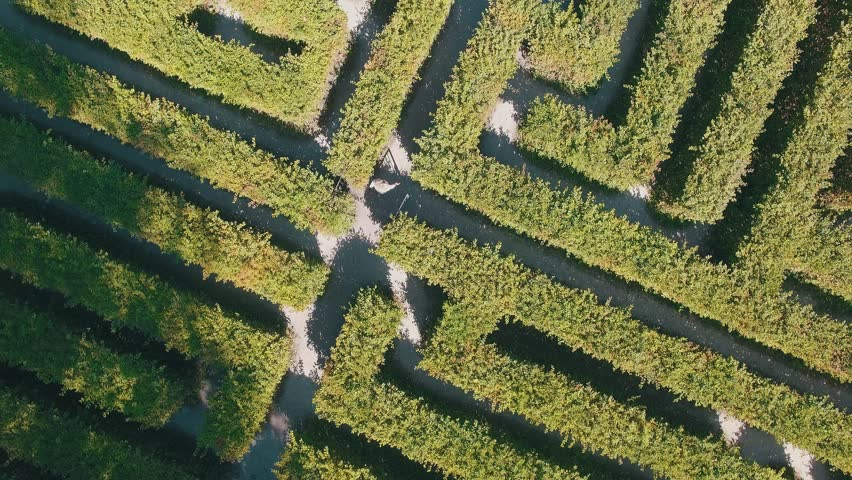 Hedge maze in city park. Labyrinth in the bushes. Beautiful summer in town, green trees. Woman is walking through a maze.
