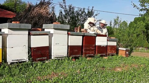 Work in apiary. Two beekeepers are on spring checking of all details in their apiary.
