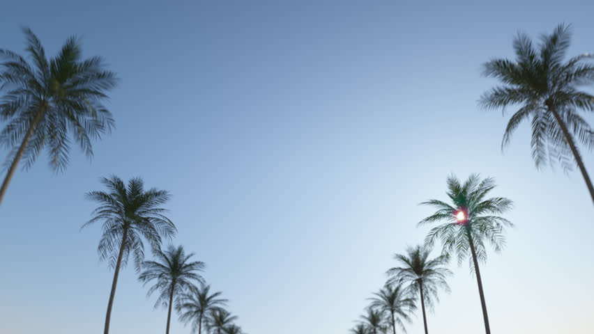 Driving down the street between tropical palms under the blue summer sky. Loop animation. In Ultra HD 4k.