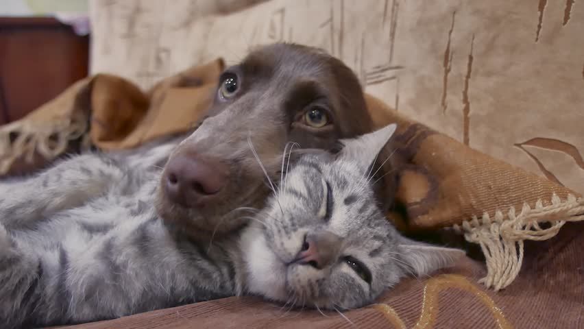Cat and a dog are sleeping together funny video. cat and dog friendship indoors. friendship pets cat dog playing