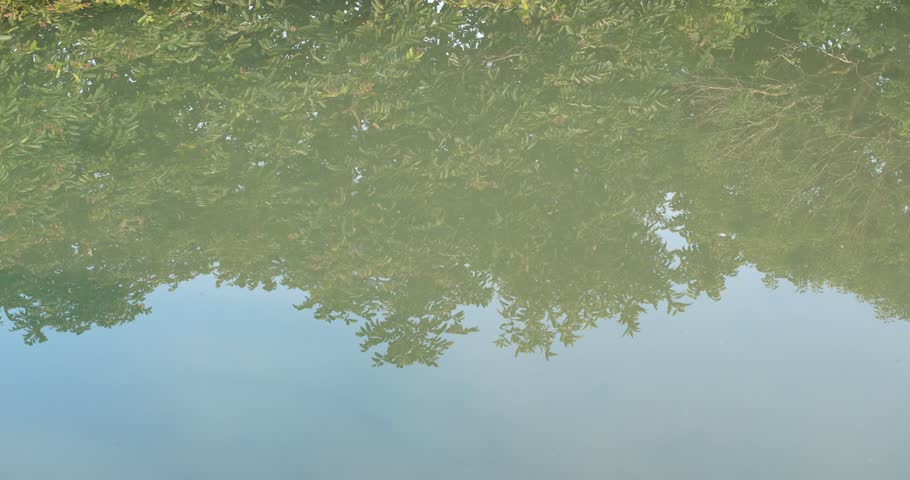 Reflection of the lake in forest   Shutterstock HD Video #1007299486