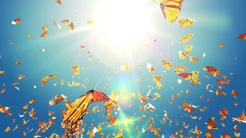 Spring or Summer sky, Monarch Butterfly Swarm flying on sun, Slow motion butterfly close up. Best for Spring and Summer Sale background with alpha matte mask loop.