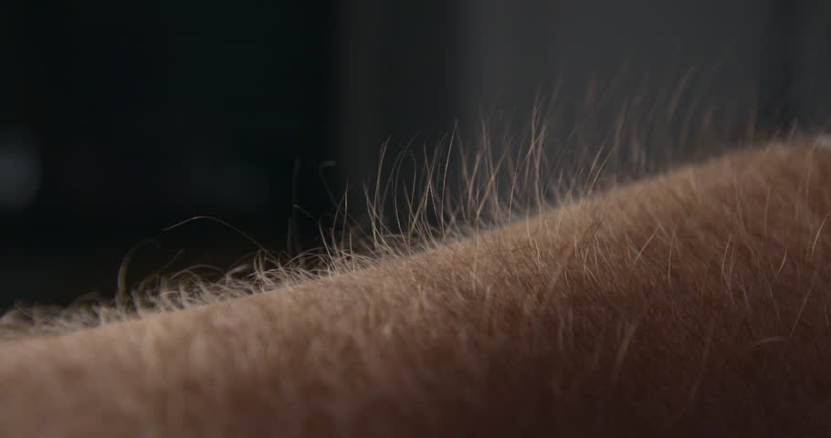 Arm hair rising slow motion, emotional feeling #1007537767