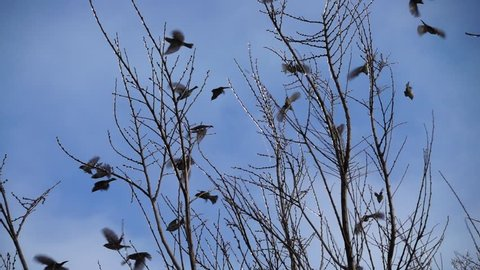 Sparrows on branches. Slow Motion.