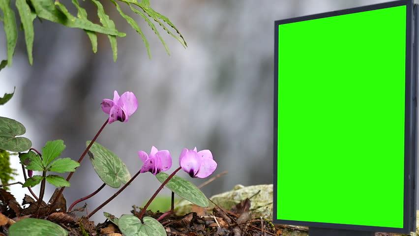 Billboard green screen near the violets flowers   Shutterstock HD Video #1007704027