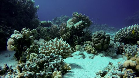 Coral reef. The marine life of tropical fish. Video under water.