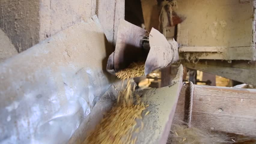 Rice produced from rice mill before milling , Srisaket, Thailand | Shutterstock HD Video #1007755714
