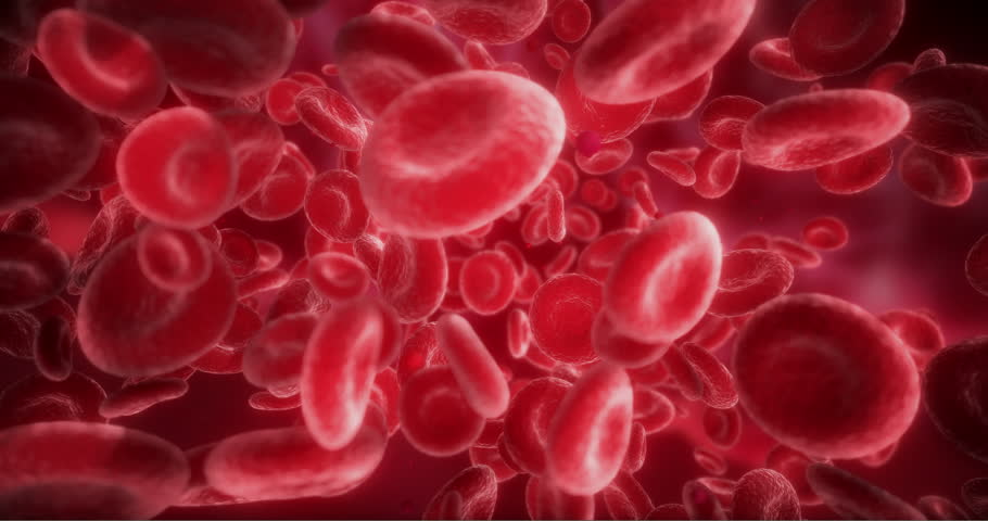 Red Blood Cells Moving in the Blood Stream, in an Artery. 3D Animation of Hemoglobin Cells Traveling Through a Vein.