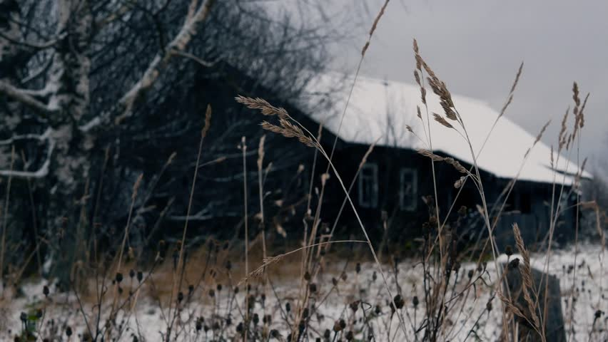 Swaying of dry grass against old wooden house