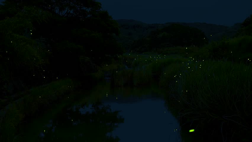 There are a lot of fireflies dancing in the summer.