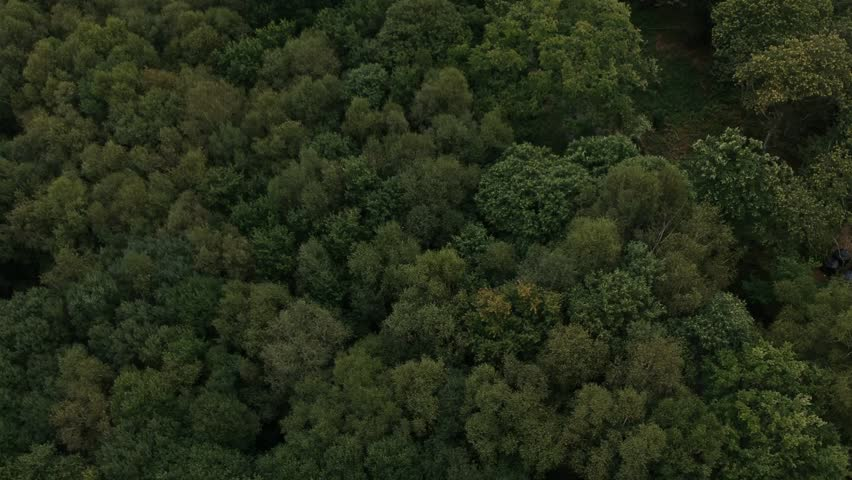 Tracking aerial shot overlooking a forest #1007946910