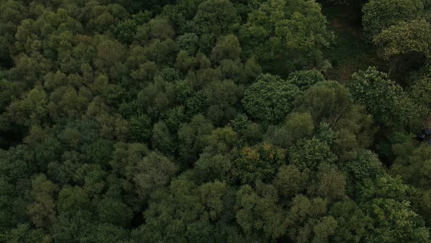 Still Aerial shot overlooking a forest_02 #1007946916