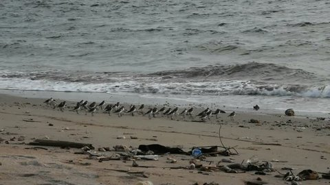 Group of small birds running away from the water in Thailand