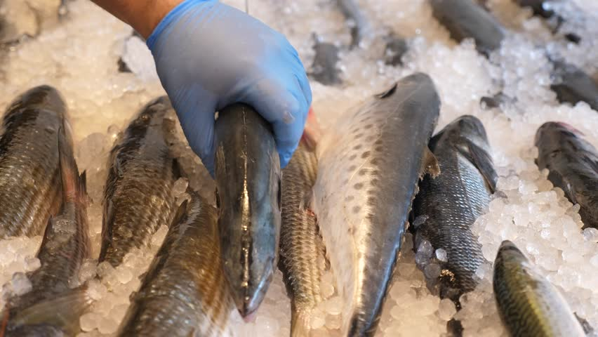 Fresh sea palamida fish placed on ice in the market | Shutterstock HD Video #1007981173