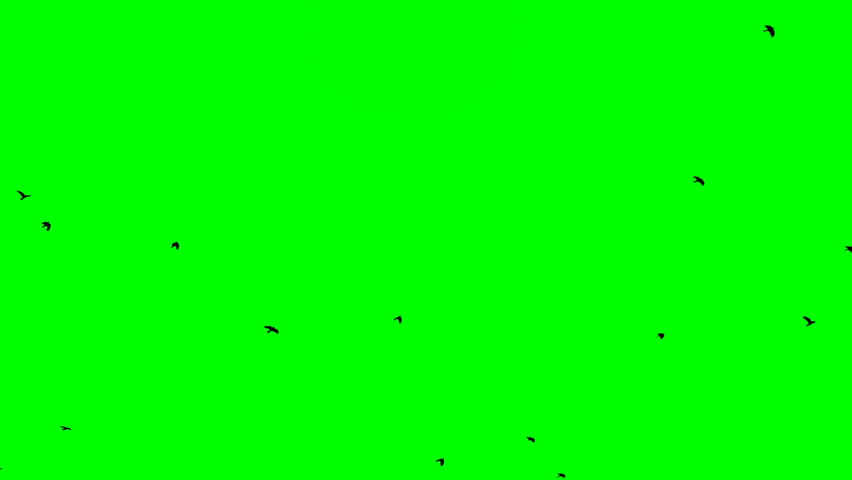 Black birds fly up from right at top on green screen background | Shutterstock HD Video #1007983093