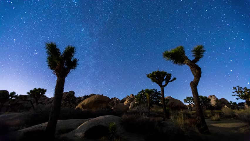 Joshua Trees night 4k timelapse with zoom in effect, Joshua Tree National Park, California
