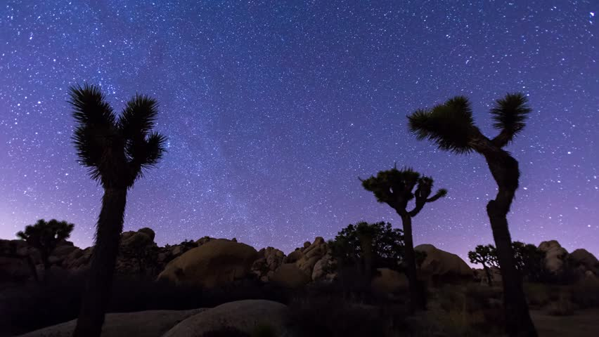 Joshua Trees night 4k timelapse with zoom out effect, Joshua Tree National Park, California