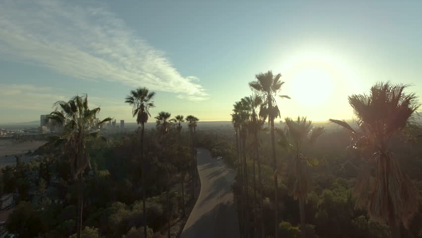 Aerial drone view above palm trees in sunlight over downtown LA | Shutterstock HD Video #1008204694