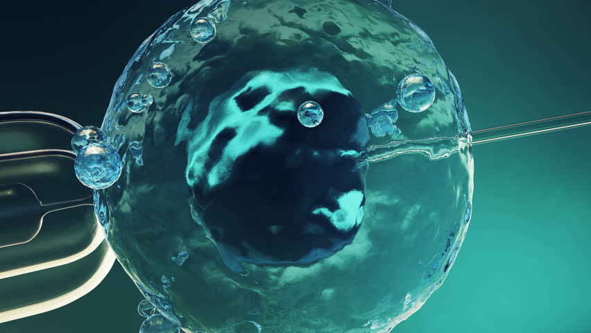 Artificial insemination in a scientific laboratory under a close-up view microscope. Fertilization of an egg cell, ovum, ovule. Concept origin of a new organism, life. 4K 3D animation | Shutterstock HD Video #1008226309