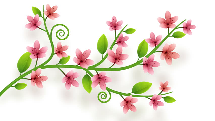 Growing flower ornament on white background with alpha   Shutterstock HD Video #1008287332