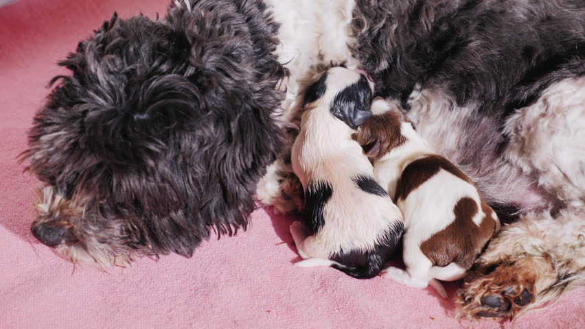 The dog feeds two newborn puppies