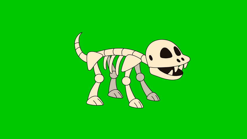 Skeleton Dog. The looping hand drawn animation of the cartoon skeleton dog. The original file HD 1080 has an alpha channel. 29.97 fps