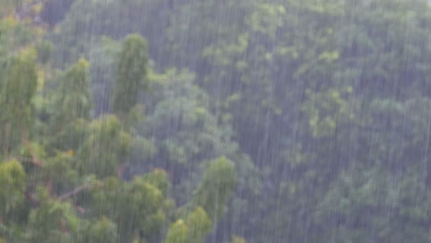 Tropical rainstorm in the jungle against the backdrop of a green forest with a palm tree. Tropical wind and rain drops falling on the green palm tree leaves. Tropical Monsoon. Bad Weather