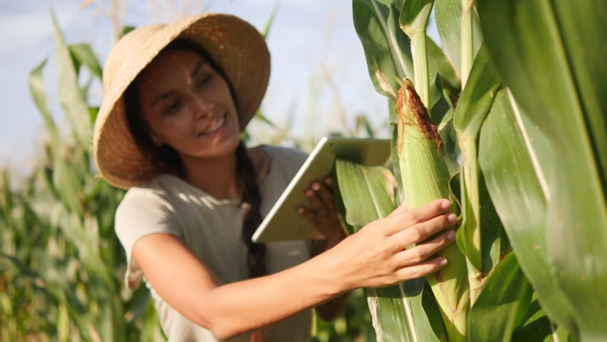 Young Mixed Race Farmer Woman Checking Corn Quality and Using Mobile Tablet Gadget at Organic Farm Field. 4K, Slowmotion. Future Technology Agricultural Food Harvest Footage Concept. | Shutterstock HD Video #1008404344