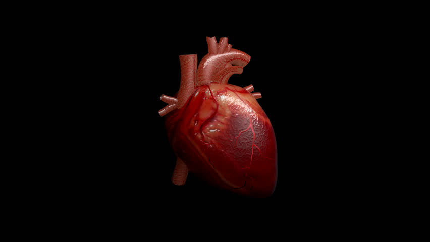 3D animation of a beating human heart with alpha channel