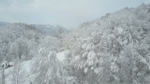 Aerial view of winter forest covered with snow. Winter alpine meadow - white hills covered with forest. Flight over Beautiful wild forest.