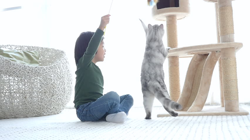 Cute Asian child playing with kitten slow motion