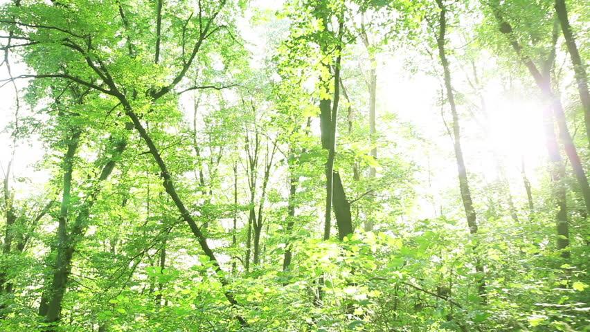 Sun light early morning green forest  | Shutterstock HD Video #1008488428