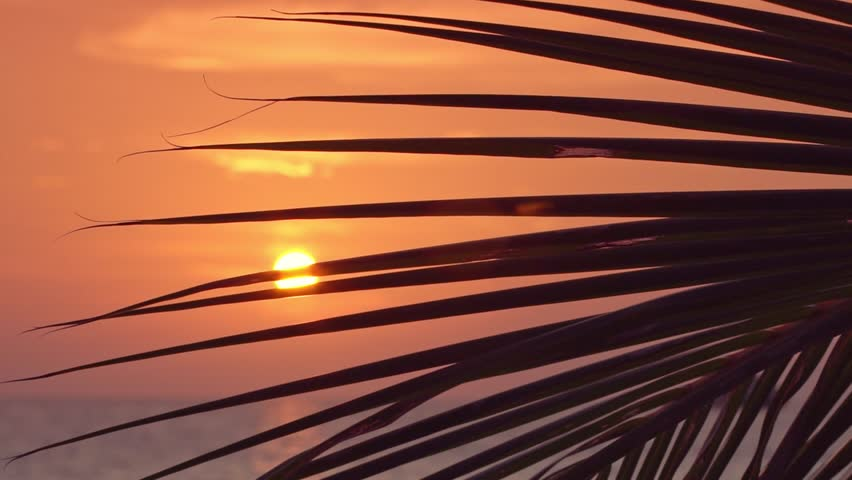 Sunset view through coconut palm tree leaf on tropical sea. Travel destination