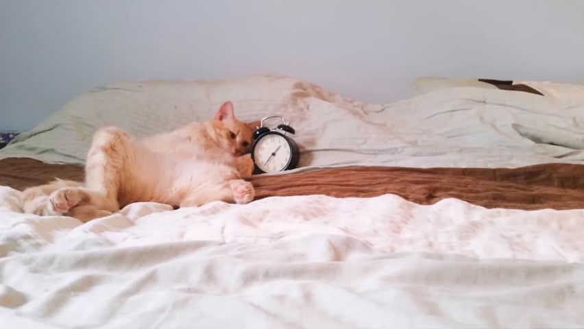 Cat turning off alarm clock #1008591070