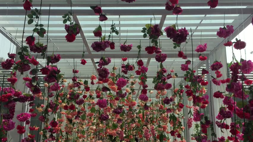 Artificial Flowers Hanging From Ceiling