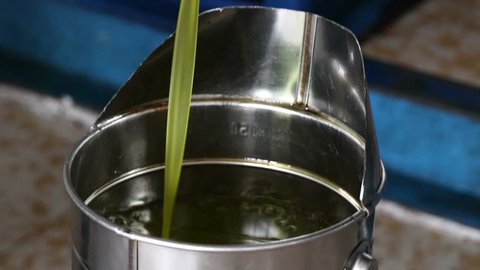 olive oil freshly extracted from the mill (frantoio)