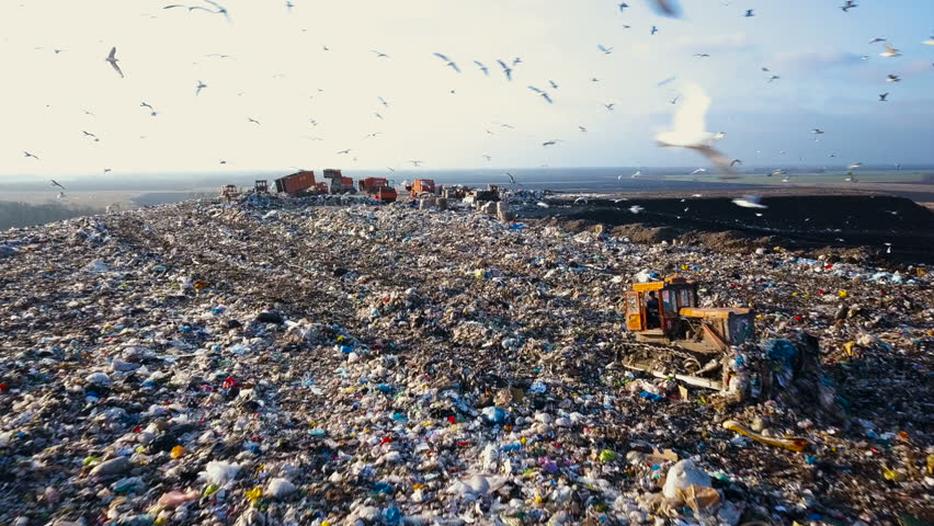 City Dump. The Bulldozer Moves Along the Landfill, Leveling the Garbage. Gulls Feeding on Food Waste Fly Over It. Aerial View