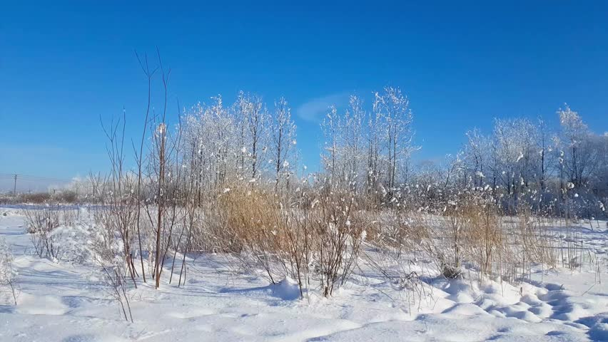 Winter snowy landscape outside the city on a Sunny frosty day. Field and trees are covered with snow. Rural nature of the severe Russian winter. Rare snowflakes falling on a blue sky background