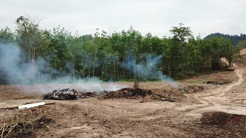 Deforestation environmental problem. Cutting down and burning rainforest.