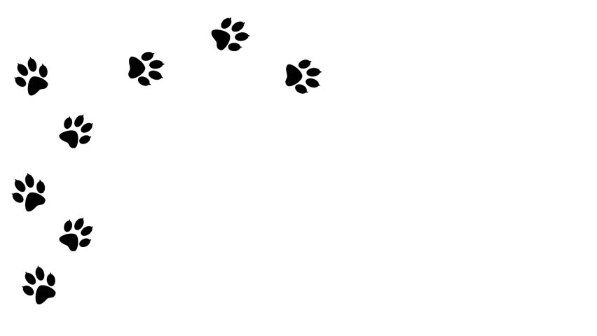 Paw prints animal running across the white space.  Traces of the predator animated in isolation.