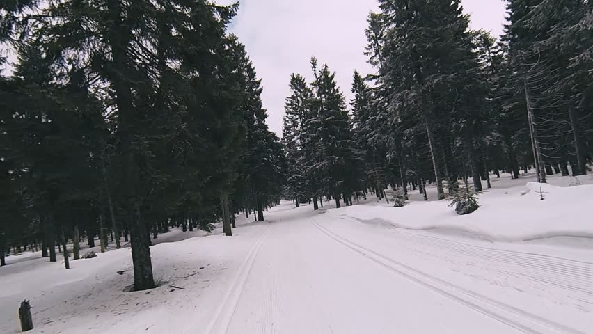 Slow motion: Winter flying over forest and cross country skiing tracks between pine trees, winter and snow drone aerial footage. Shot with Gopro Hero 3 black.
